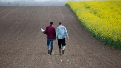 Photo of Transmission d'entreprise agricole et pacte Dutreil, quoi de neuf ?