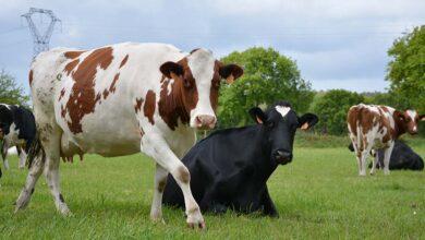 Photo of Alimentation : 70% des protéines sont d'origine animale