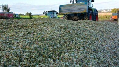 Photo of Ensilage : La matière sèche dirige le tassage