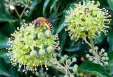 Photo of Une bonne mise en hivernage pour des ruches en bonne santé au printemps