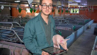 Photo of D'apprenti à salarié porc