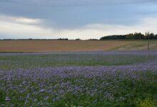 Photo of Des propositions communes pour réguler le foncier agricole