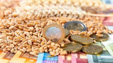 Photo of Taux de change, la boussole des marchés agricoles