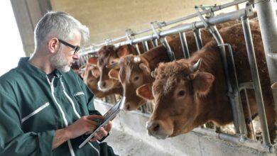 Photo of Quels sont les risques liés à la manipulation des animaux