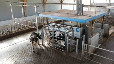 Photo of Exploitations laitières : L'astreinte pèse toujours davantage