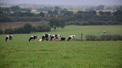 Photo of Une mobilisation territoriale des agriculteurs sur le climat