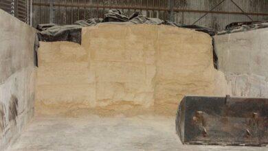 Photo of L'atout maïs grain humide