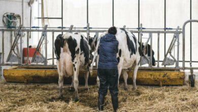 Photo of La Prim'Holstein révise son Isu