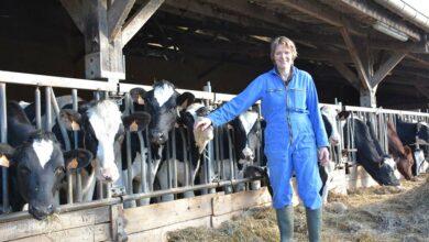 Photo of Le potentiel d'une future bonne laitière se joue sur 8 semaines