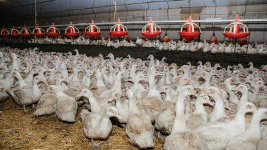 Photo of Covid-19 : Des aides pour le secteur agricole