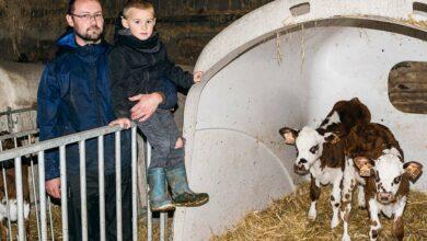 Photo of Pourquoi j'ai délégué l'élevage de mes génisses