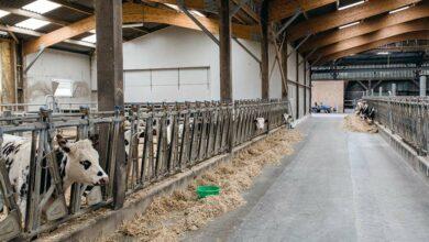 Photo of L'élevage des jeunes remis à plat donne de jolis résultats