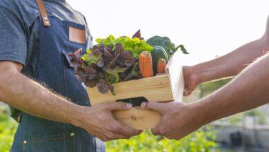 Photo of Une solution «click and collect» pour  les produits fermiers